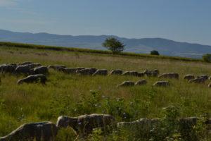 Pastviny u Českého Sela