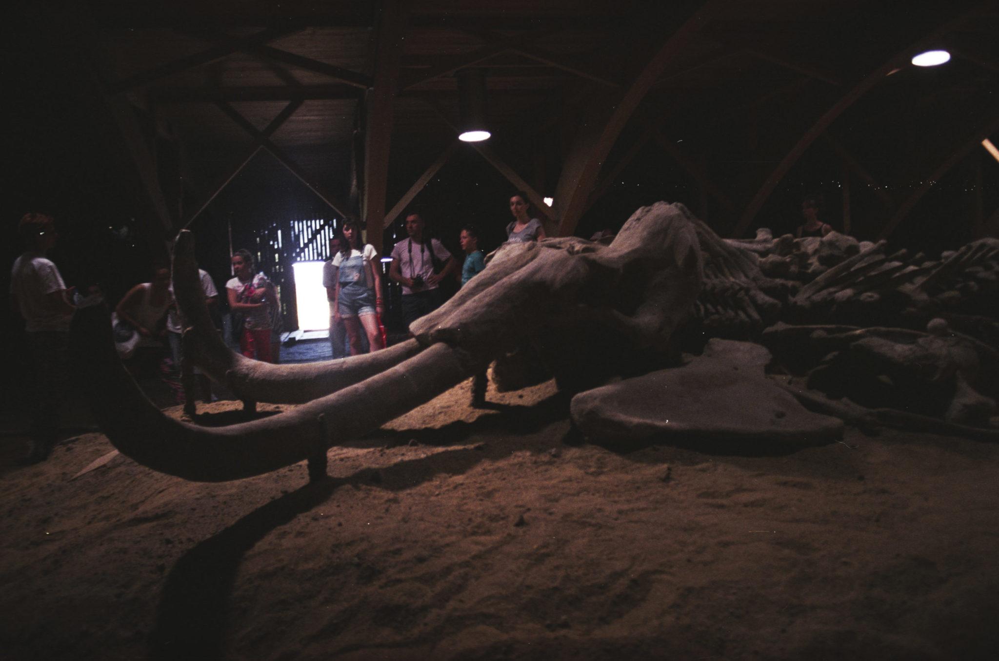 U Viminacia - kostra mamuta